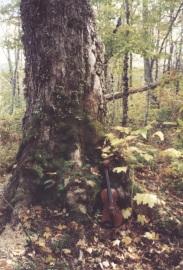 fiddle & tree