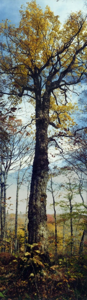 fiddletree-comp
